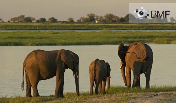 Una família de tres elefants, dos adults i una cria, descansen al costat del riu d'una verda plana.