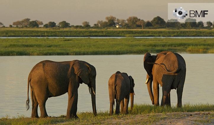 Una familia de tres elefantes, dos adultos y una cría, descansan junto al río de una verde llanura.