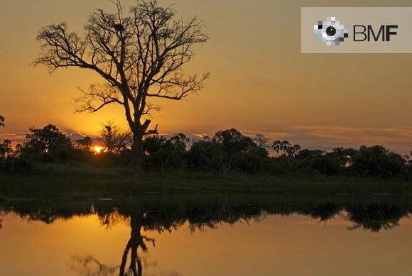 Una posta de sol ataronjada acompanya la imatge d'un arbre i la seva fosca silueta sobre un riu de Tanzània.