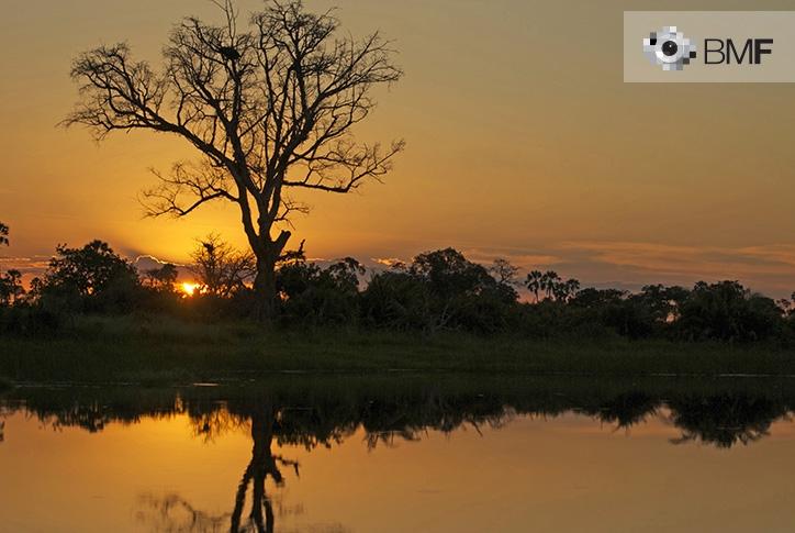 Una puesta de sol anaranjada acompaña la imagen de un árbol y su oscura silueta sobre un río de Tanzania.