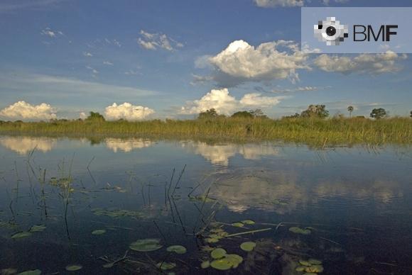 Una llacuna reflecteix els colors verds de les plantes que l'envolten i del cel blau amb núvols que l'embolica. El verd ens separa els blaus del cel i de la llacuna.