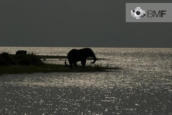 Al centre de la imatge veiem, sota la llum de la lluna, una silueta d'un elefant majestuós. La seva figura al costat de la riba de la llacuna queda completament embolicada per les aigües. En l'horitzó, la llacuna dóna pas a un cel completament gris.