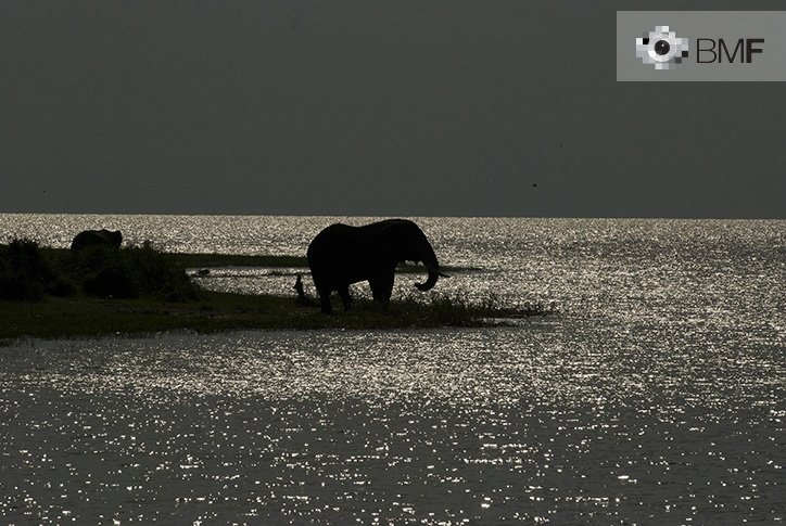 In the centre of the photo we see, under the moonlight, a silhouette of a majestic elephant. Its figure by the shore of the lagoon is completely surrounded by water. On the horizon, the lagoon gives way to a completely grey sky.