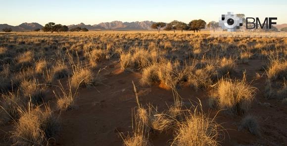 Imatge d'un paisatge on el protagonista és la pastura groguenca de la sabana infinita on es troba el fotògraf. En l'horitzó, es veuen uns arbres i muntanyes que donaran pas a un cel clar i discret.