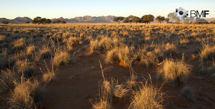Imagen de un paisaje donde el protagonista es el pasto amarillento de la sabana infinita donde se encuentra el fotógrafo. En el horizonte, se vislumbran unos árboles y montañas que darán paso a un cielo claro y discreto.