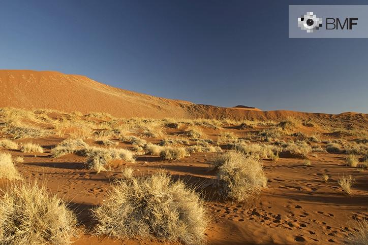Plano general de un desierto en el cual podemos apreciar una serie de arbustos amarillentos esparcidos entre las dunas rojas que lo caracterizan.