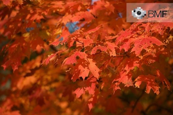 Primer plano de un rojizo árbol con sus hojas secas y rotas que se agrupan unas encima de las otras. El azul del cielo se cuela puntualmente entre algunas hojas.