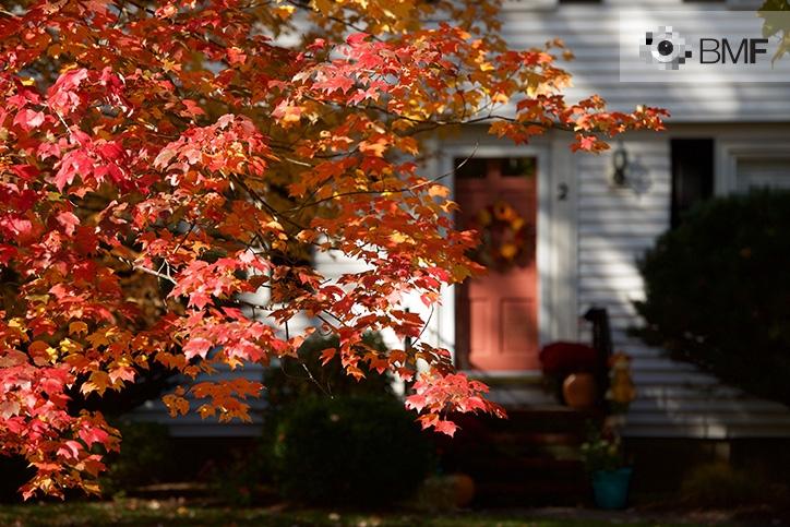 Un árbol de hojas rojizas guarda la entrada de una casa de madera blanca con una puerta roja decorada con la corona de Halloween. La corona se confunde con las hojas que la protegen.